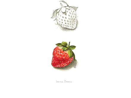 ioana pioaru day12_fruit